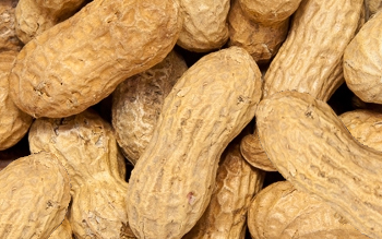 Peanuts, In-Shell Bulk
