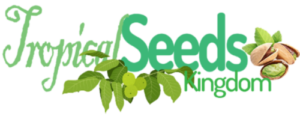 Buy Seeds | Nuts | Almond Online